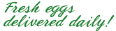 Fresh Eggs Delivered Daily!
